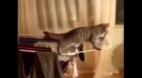 Кот ворует одежду