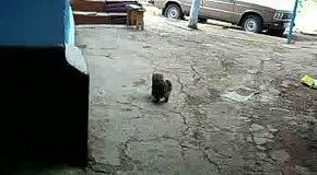 Кот с мячиком