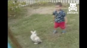 Кролик ударил малыша