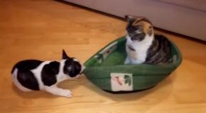 Невозмутимы кот