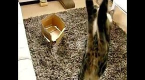 Как прыгает кот Мару