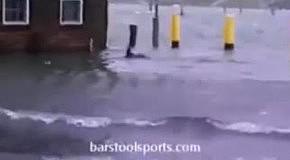 Акулы на улицах Нью-Йорка после урагана Сэнди