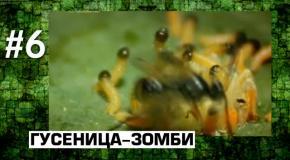 10 Реальнх животных-зомби.