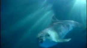 """Дайвінг з дельфінами. """"Братья по разуму"""""""