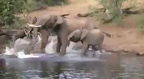 Слон поймал крокодила на хобот