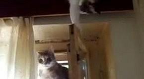 Кот подло хотел выбросить друга в окно