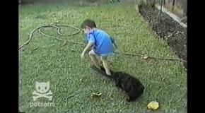 Щенок стащил шорты с ребенка