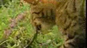 Котики-Наркотики