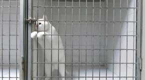 В мире животных: Мастера побега встречаются и среди котов