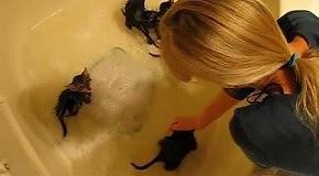 Милые котята возмущаются купанию в ванной
