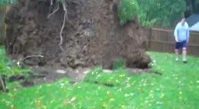 Ураганный ветер губит дерево
