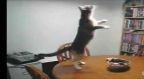 Ржачные котики