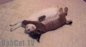 Cat kicks with the Lynx