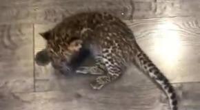 Пятничные котики - большие и маленькие...