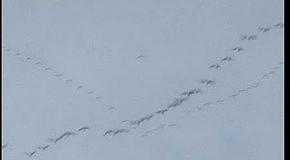 Пси)(ея - Бесконечный стук шагов