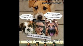 КНДР Ким Чен Ир собаки
