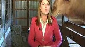 Верблюд ест волосы репортера