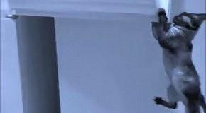 Коты открывают двери: подборка лучших видео