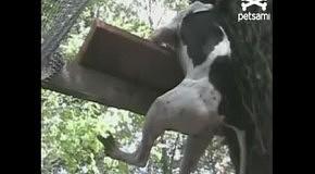 Собачий побег из вольера
