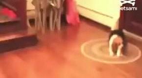 Пес хитростью отбирает косточку