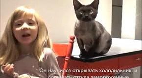 ТОП-10 умных котов, умеющих открыть дверь