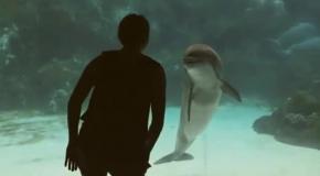 Акробатика для дельфина