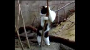 Кот танцует стриптиз