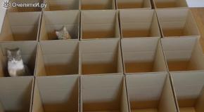 Картонный рай для кошек