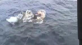 Акулы съели огромный улов рыбаков
