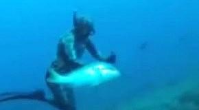 Рыба отобрала улов аквалангиста