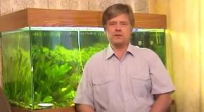 Славянская ПсихоФизическая система 'БелоЯр' урок№2(Все бесплатно)