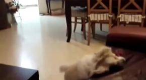 Собачьи неудачи.