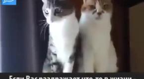 Кот, на которого стоит равняться