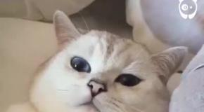 Кот замаскировался