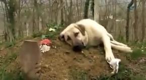 Собаки грустят на могилах хозяев