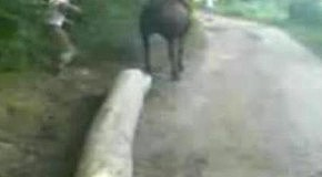 Нокаут от коня - ну зачем приставать