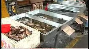 Рибні правила