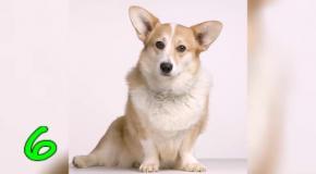 Животные друзья человека  ТОП случаев спасения людей животными
