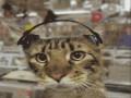 Коты диджеи 3