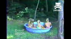 Свинья испугала детей у бассейна