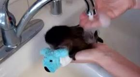 Обезьянка боится купаться без своей игрушки