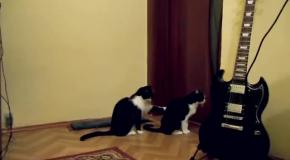 Как коты просят прощение