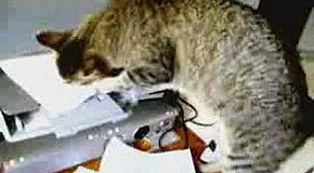 Проблема с принтером :-)
