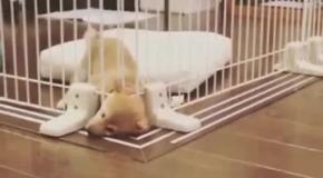 Щенок сбегает из неволи