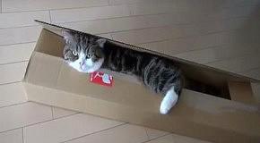 Мару и длинная коробка