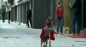 Талантливый пес