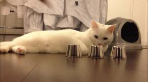 Кот наперсточник