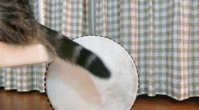 Музыкальные таланты Мару