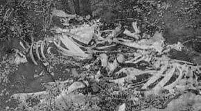 :Wumpscut: - Die in winter