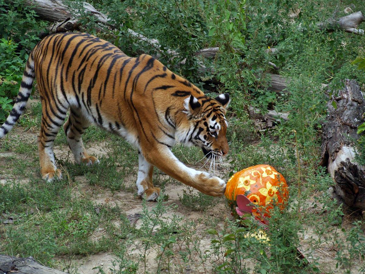ТОП-20 самых забавных фото животных этой недели изоражения